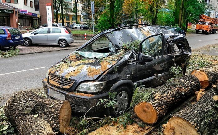 Zniszczony samochód - drzewo