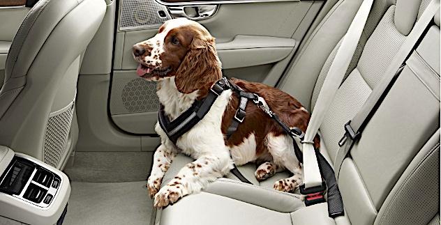 Volvo XC90 - uprząż dla psa