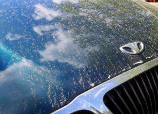 Skąd się bierze żółty pył na samochodach? Czy jest groźny dla lakieru?