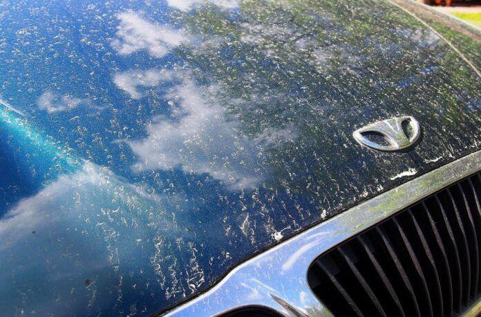 Żółty pył na samochodach